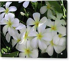 F2 Plumeria Frangipani Flowers Hawaii Acrylic Print by Donald k Hall