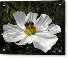 f21 Acrylic Print by Tom Griffithe