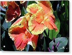 F24 Cannas Flower Acrylic Print by Donald k Hall