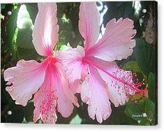 F4 Hibiscus Flowers Hawaii Acrylic Print by Donald k Hall