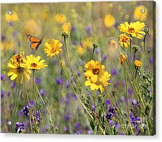 f5 Acrylic Print by Tom Griffithe