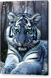 Fabled Acrylic Print by Julie L Hoddinott