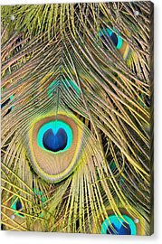 Acrylic Print featuring the photograph Fabulous Feathers by Margaret Bobb