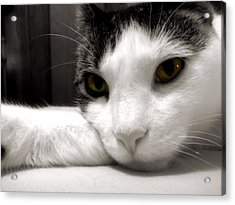 Fabulous Feline Acrylic Print by JAMART Photography