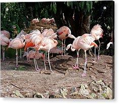 Fabulous Flamingos Acrylic Print
