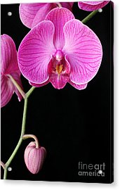 Face Of Orchid Acrylic Print by Angie Bechanan
