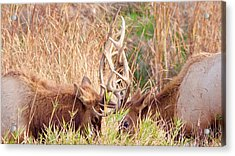 Acrylic Print featuring the photograph Face Off by Todd Kreuter