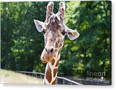 Face To Face  Acrylic Print by A New Focus Photography