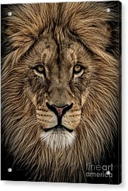 Facing Courage Acrylic Print by Brad Allen Fine Art