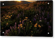 Acrylic Print featuring the photograph Facing The Day by Mike Lang