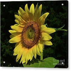 Hand Made By God Acrylic Print