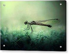 Fade Away Acrylic Print by Erwin Astro