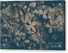 Acrylic Print featuring the photograph Faded Flowers by Edward Fielding