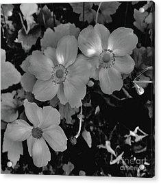 Faded Flowers Acrylic Print