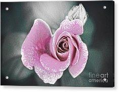 Faded Romance Acrylic Print