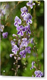 Fadeout Acrylic Print by Jean Booth