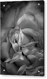 Acrylic Print featuring the photograph Fading Beauty by Mike Lang