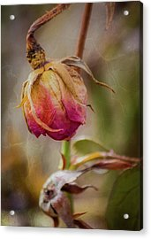 Fading Color Of Summer Acrylic Print