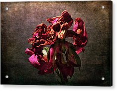 Acrylic Print featuring the photograph Fading Glory by Randi Grace Nilsberg