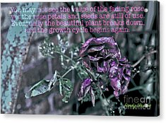 Acrylic Print featuring the photograph Fading Rose by Sandy Moulder