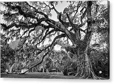 Fairchild Tree Acrylic Print