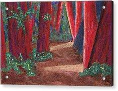 Fairfax Redwoods Acrylic Print