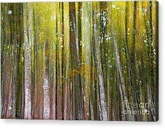 Acrylic Print featuring the photograph Fairy Forest I by Yuri Santin