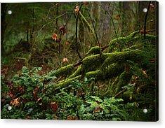 Fairy Forest Acrylic Print