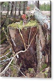 Fairy House On Stump Acrylic Print