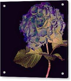 Fairy Hydrangea Acrylic Print