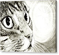 Fairy Light Tabby Cat Drawing Acrylic Print