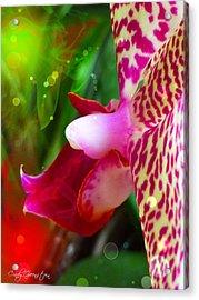 Fairy Orchid Acrylic Print