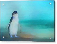 Fairy Penguin Western Australia Acrylic Print by Michelle Wrighton