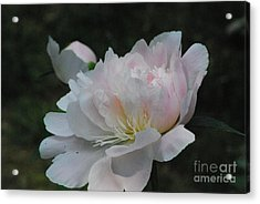 Fairy Tale Bloom Acrylic Print by Sharen Duffing