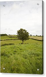 Acrylic Print featuring the photograph Fairy Tree In Ireland by Ian Middleton