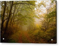 Fairy Wood Acrylic Print by Evgeni Dinev