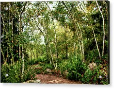Acrylic Print featuring the photograph Fairy Woodlands by Sheryl Thomas