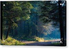 Fairytale Woods Acrylic Print