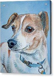Beloved Dog Commission By Irina Sztukowski  Acrylic Print by Irina Sztukowski