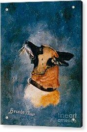 Falco Acrylic Print by Brenda Thour