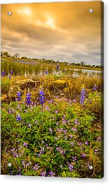Zapata Falcon Lake 2 Acrylic Print by Leticia Latocki