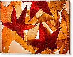 Fall 002 Acrylic Print by Bobby Villapando