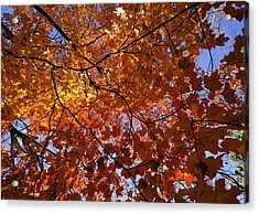 Fall 2010 14 Acrylic Print