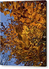 Fall 2010 51 Acrylic Print by Robert Ullmann