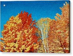 Fall Acrylic Print by Allan OMarra