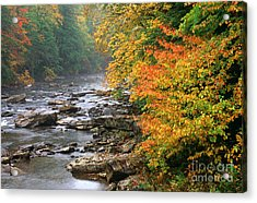 Fall Along The Cranberry River Acrylic Print by Thomas R Fletcher