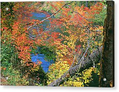 Fall Along The Upper Rogue Acrylic Print by Jim Nelson