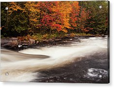 Fall At Oxtongue Rapids Acrylic Print