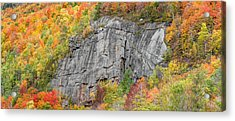 Fall Climbing Acrylic Print