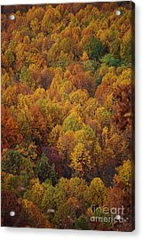 Fall Cluster Acrylic Print by Eric Liller